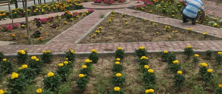 Park Bahçe Çalışmaları